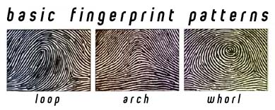 What are the Different Types of Fingerprint Patterns?