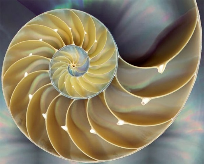 Fibonacci's Golden Spiral - The Relationship between Maths ...