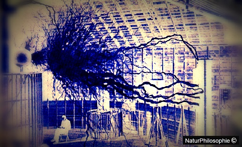 An original interpretation in inverted negative colours blue and white of the famous 1901 historical black and white photograph showing ground-breaking inventor and electricity visionary Nikola Tesla sitting in his laboratory at Colorado Springs amid a flurry of artificially-produced lightning discharges. Image: NaturPhilosophie